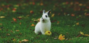Formación veterinaria: las profesiones con futuro en veterinaria