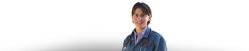 auxiliar veterinario ecuestre