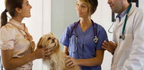 funciones auxiliar clínica veterinaria