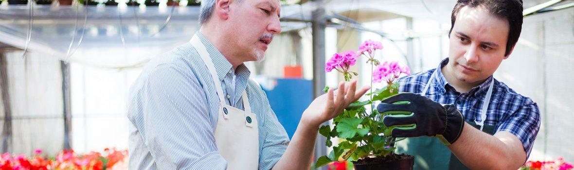 Curso de Experto/a en floristería, floricultura y ornamentación + Certificado de Profesionalidad de Actividades de venta