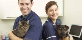 ¿Qué es un Ayudante Técnico Veterinario? Te lo explicamos