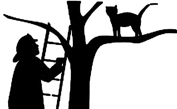 Bomberos y gatos
