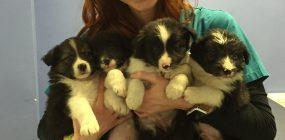 E learning veterinaria: «Los alumnos buscan hacer de su pasión, su profesión»