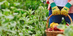 Curso de Especialista en Jardinería y Agricultura Ecológica