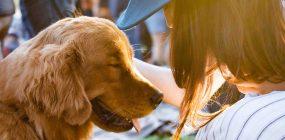 Sueldo adiestrador canino: lo que gana un adiestrador de perros