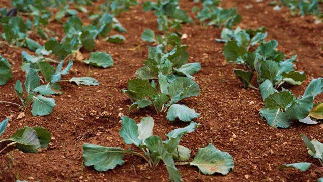 cursos de agricultura ecologica