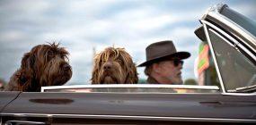 Sueldo peluquero canino
