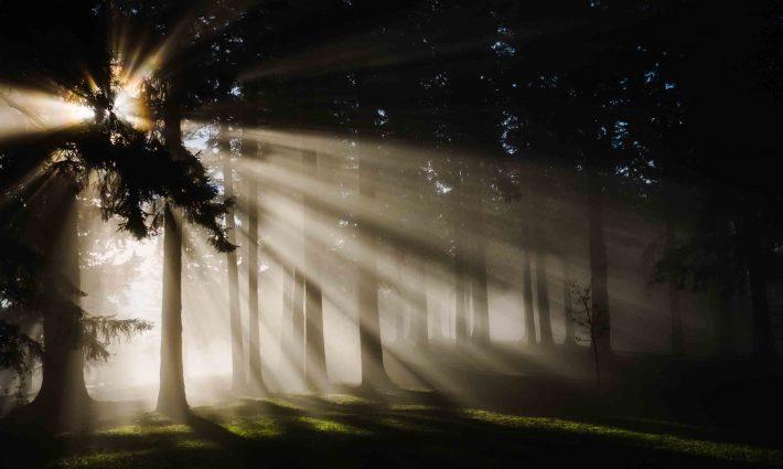 Gestion forestal y del medio natural a distancia