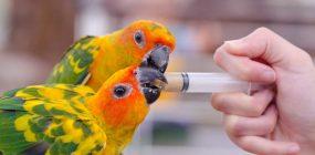 Escuela de veterinaria: elige la mejor para trabajar con animales