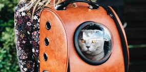 Estudios de Veterinaria: tus opciones para trabajar con animales