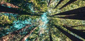 Temario guarda forestal: conoce los temas
