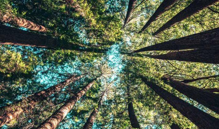 Temario guarda forestal