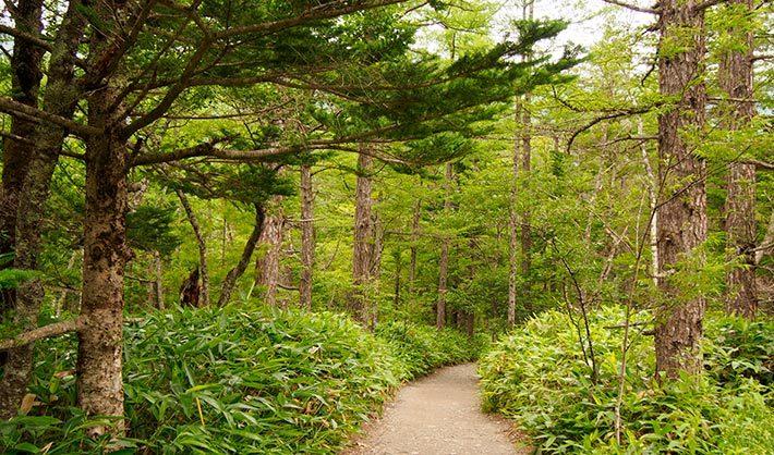 gestión forestal y del medio natural - técnico