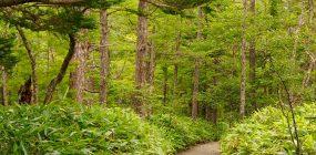 Gestión forestal y del medio natural: vocación por la naturaleza