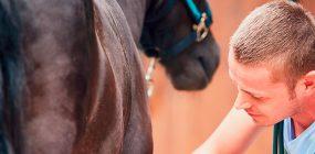 Auxiliar Veterinario Ecuestre y la pasión por los caballos