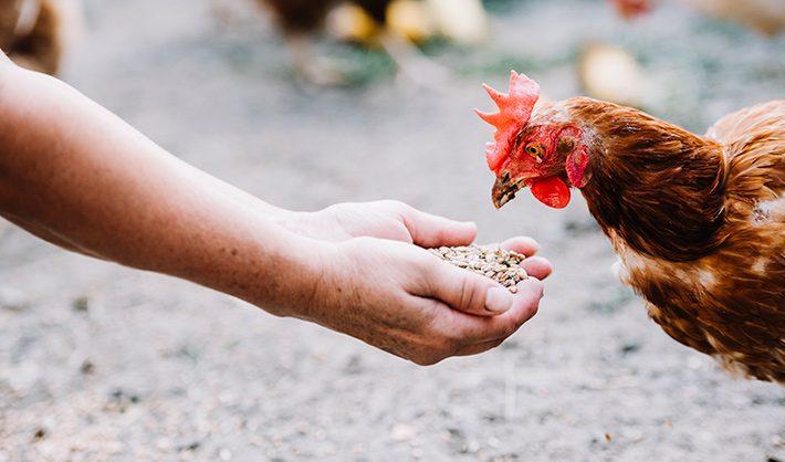 curso nutrición animal dietista animal