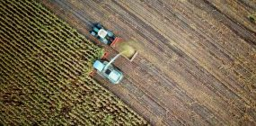 Requisitos para ser joven agricultor