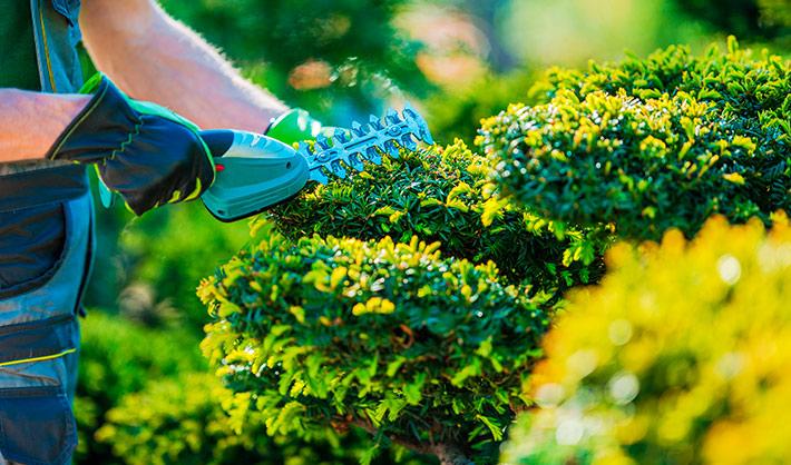 trabajos forestales y de conservación del medio natural