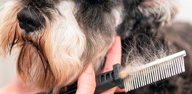 Cómo ser peluquero canino. Todos los pasos a seguir