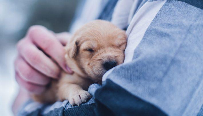 curso auxiliar veterinaria valencia
