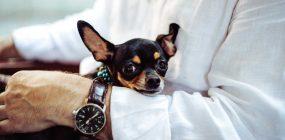 Dónde estudiar terapia asistida con animales: una profesión de futuro