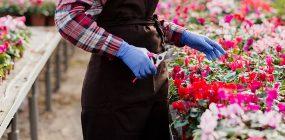 Descubre el sueldo florista. El salario de un floricultor