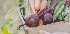 ¿Cómo surgió la agricultura ecológica? Conviértete en especialista