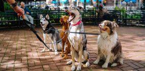 Cuántos tipos de adiestramiento canino existen: ¿lo sabes?