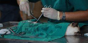 Enfermería en Veterinaria