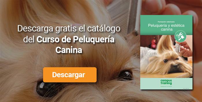 Descarga el catálogo para el curso: Curso de Peluquería Canina