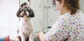 Cómo montar una peluquería canina