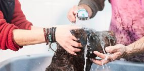 Curso Peluquería Canina en Barcelona: formación veterinaria