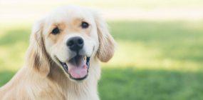 Curso Terapia Asistida con Animales Valencia. ¡Tu oportunidad!