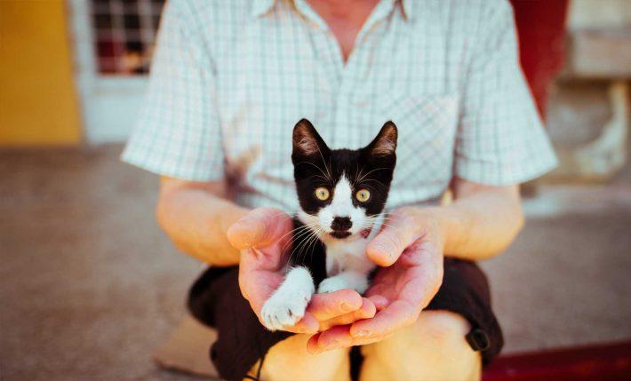 terapia asistida con animales barcelona