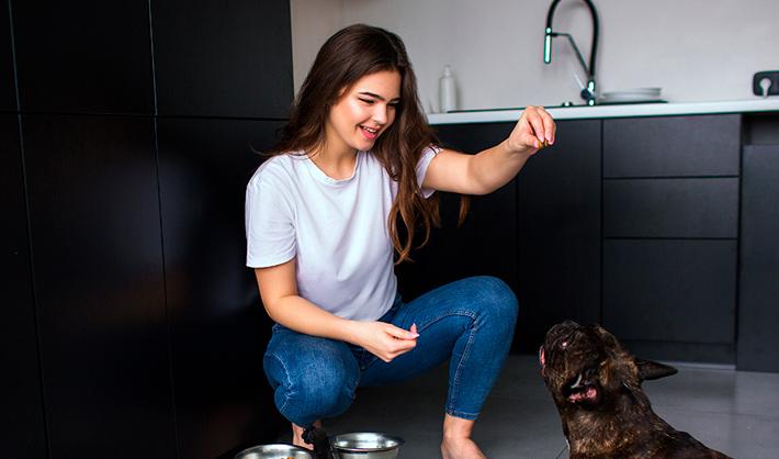 Adiestramiento canino a domicilio – oportunidad de negocio