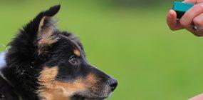 El adiestramiento canino con clicker