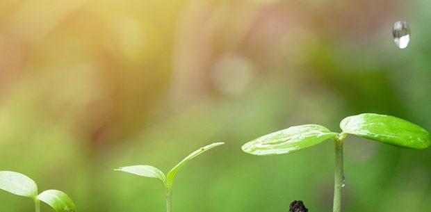 Agricultura ecológica: ventajas y características principales