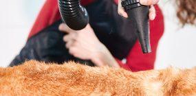 Curso Peluquería Canina Valencia: sé peluquero canino
