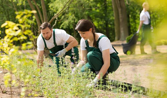 escuela de jardinería - estudiar jardinería