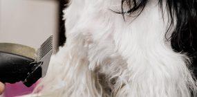 Oportunidades laborales: peluquería canina a domicilio