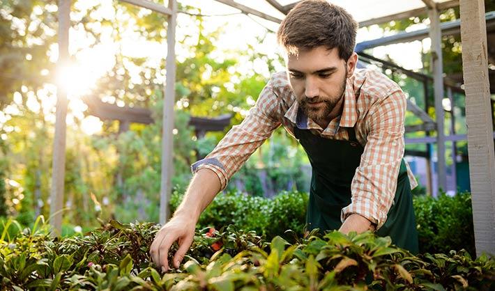 qué es un jardinero - estudiar jardinería