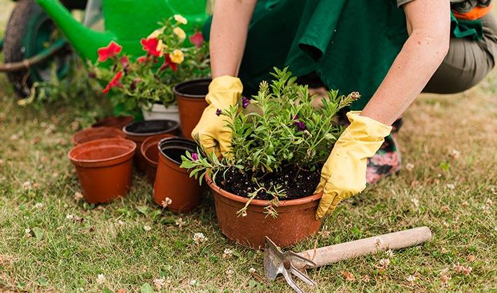 estudiar curso jardinería