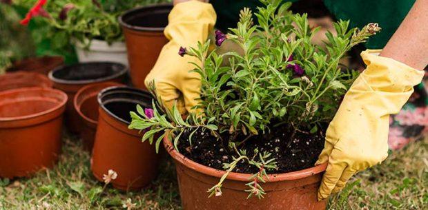 Temario de curso de jardinería
