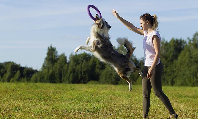 Curso Adiestramiento Canino Barcelona − Adiestrador Canino