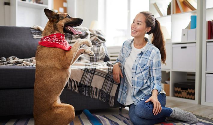 Curso Adiestramiento Canino online - ser adiestrador