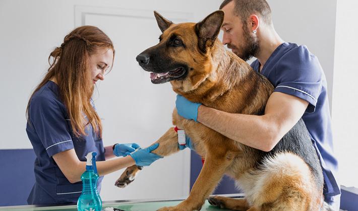 Trabajo como auxiliar veterinario – Campus Training