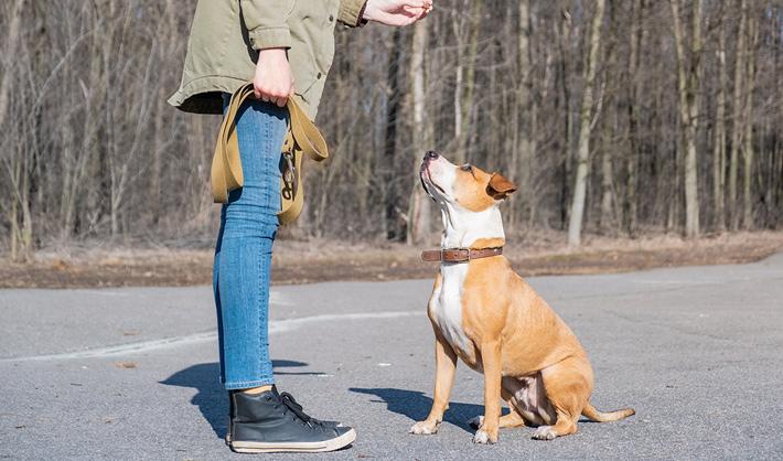 Curso Adiestramiento Canino Madrid − Campus Training