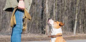 Curso Adiestramiento Canino Madrid: trabaja como adiestrador