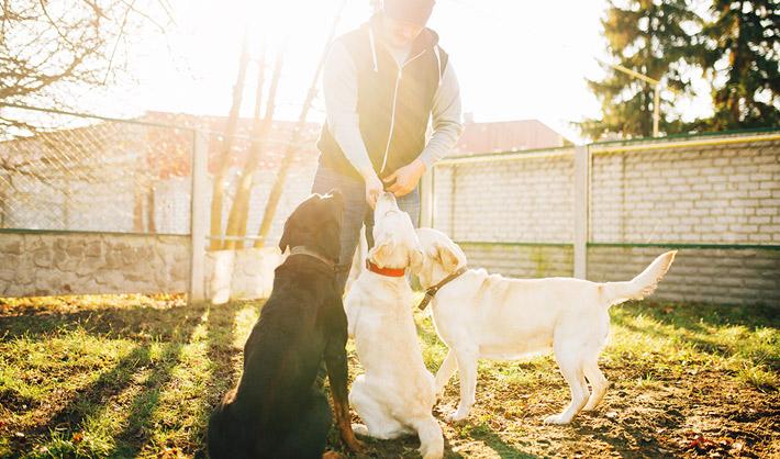 curso adiestramiento canino málaga online