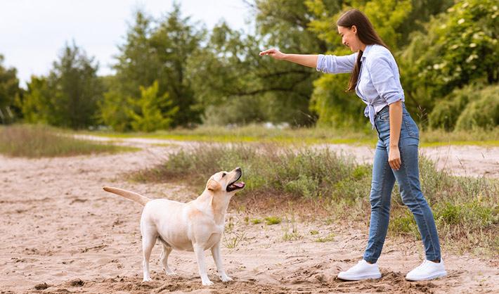 Curso Adiestramiento Canino Zaragoza − Campus Training